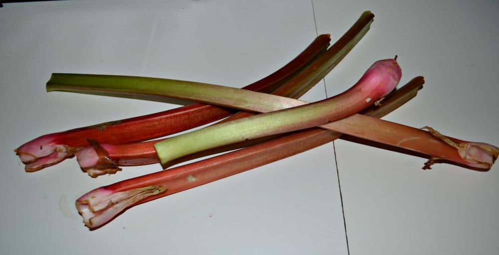 Fresh Rhubarb makes delicious jam