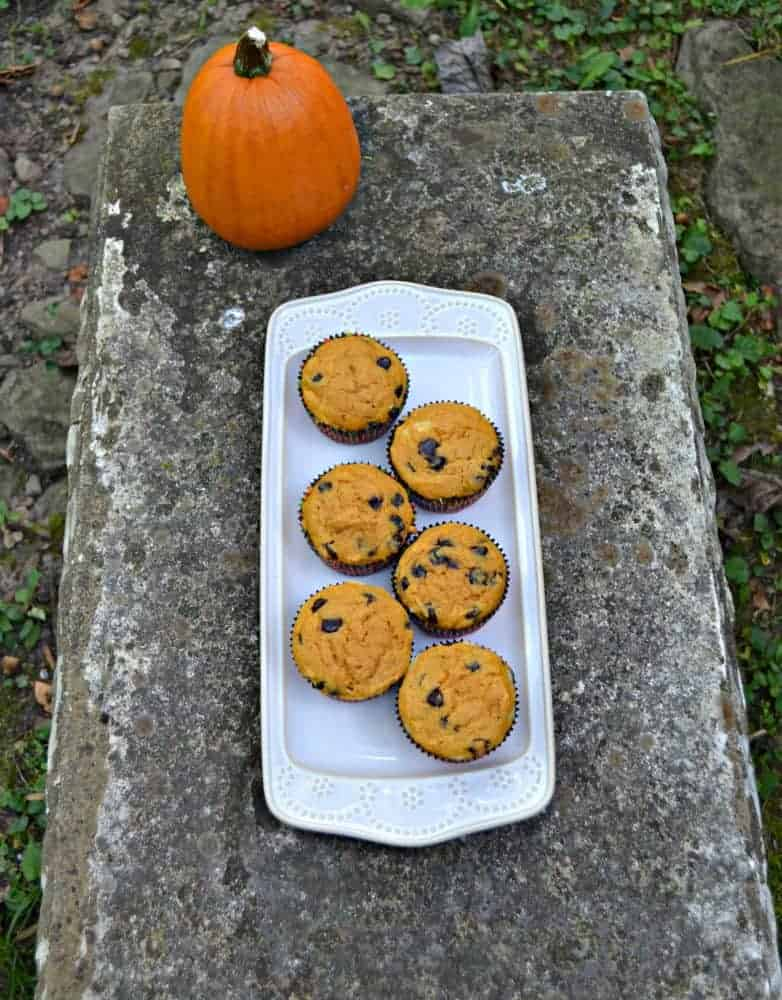Pumpkin Chocolate Chip Muffins with Cheesecake Swirl