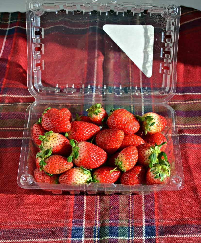 Only fresh, rip Florida Strawberries will do this winter!